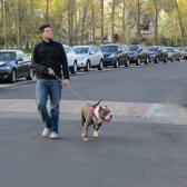 man walking his dog,products dog ideas