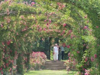 my valentine garden, of love pink arch roses