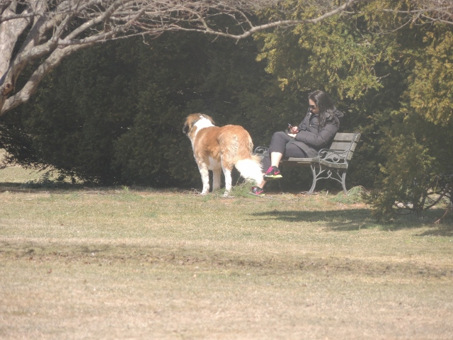 alone with dog, dog and product