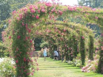 arch rose garden,valentine garden