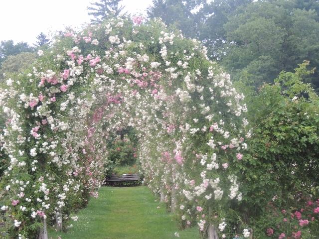 arch white roses elizabeth park,love displays