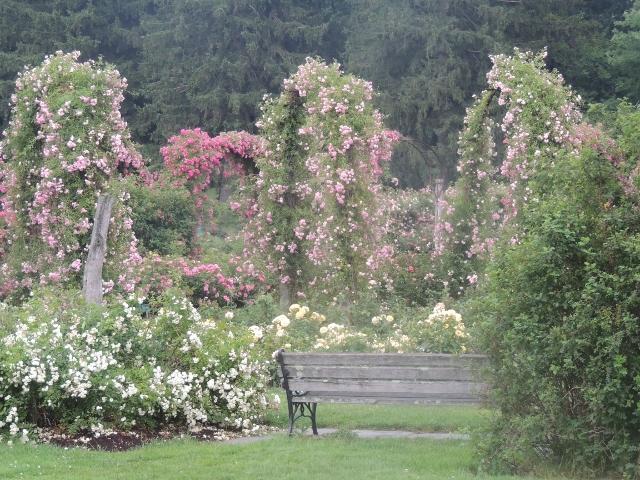 bench in the rose garden, elizabeth park-pictures,images