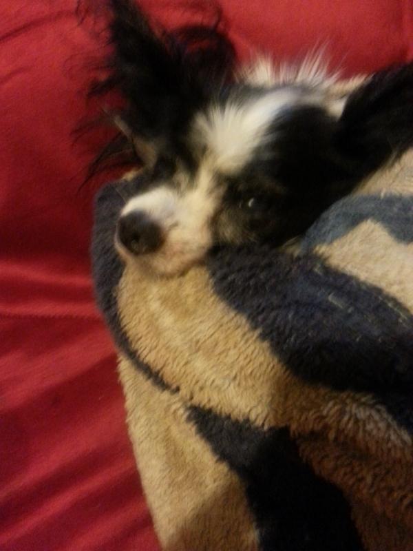chip my amazing dog, my friend my dog dead