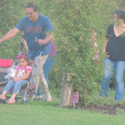 Man pushing stroller in garden,images