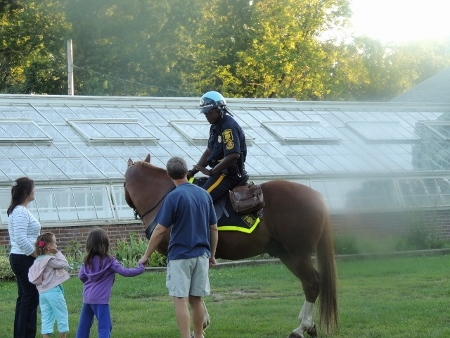 mounted police at concerts elizabeth park,love pics