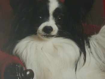 my dog chip,contact us
