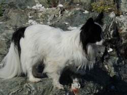 my dog climbing, products ideas for dogs
