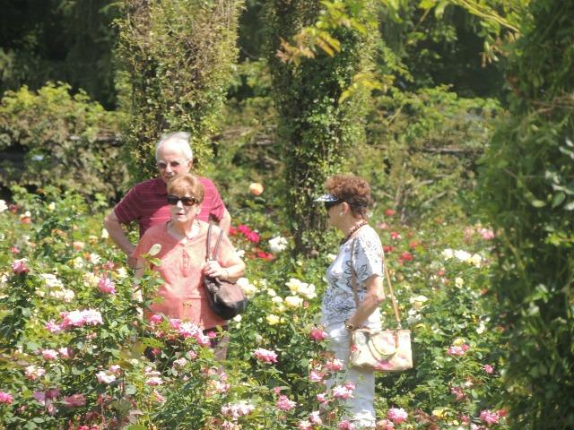 older women in rose garden,with man conversing