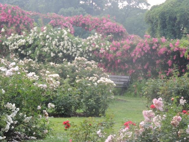 relaxing rose garden,Elizabeth park,images