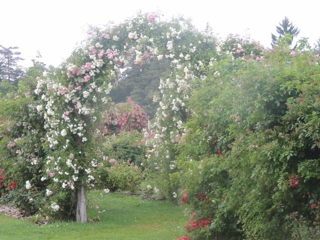 the rose garden elizabeth park,ct,images pictures